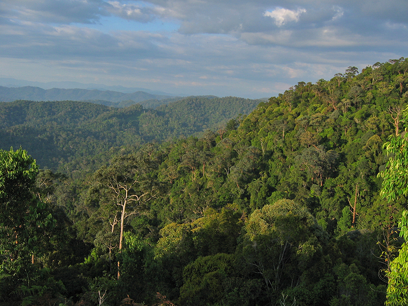 National Park (Taman Negara) General View